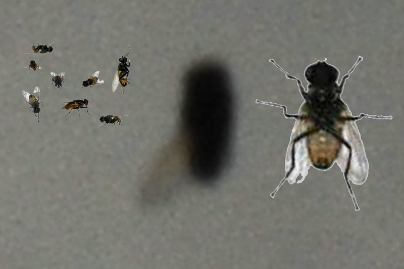 Comparative analysis of anomaly and known Housefly configurations